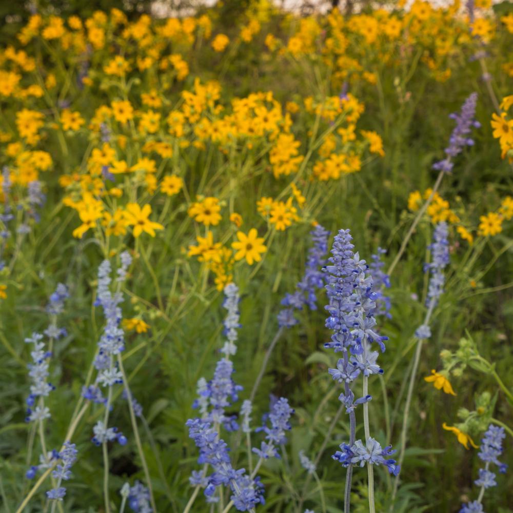 20180424-Wild Flowers-01472.jpg