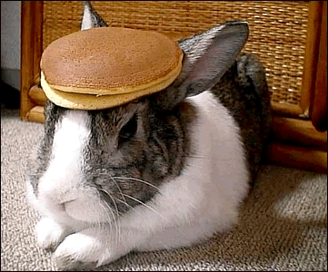 rabbit_pancake.png