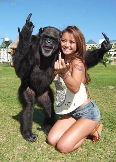 Vulgar-monkey.jpg